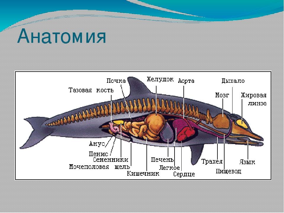 картинки внутренности кита что четвероногие друзья