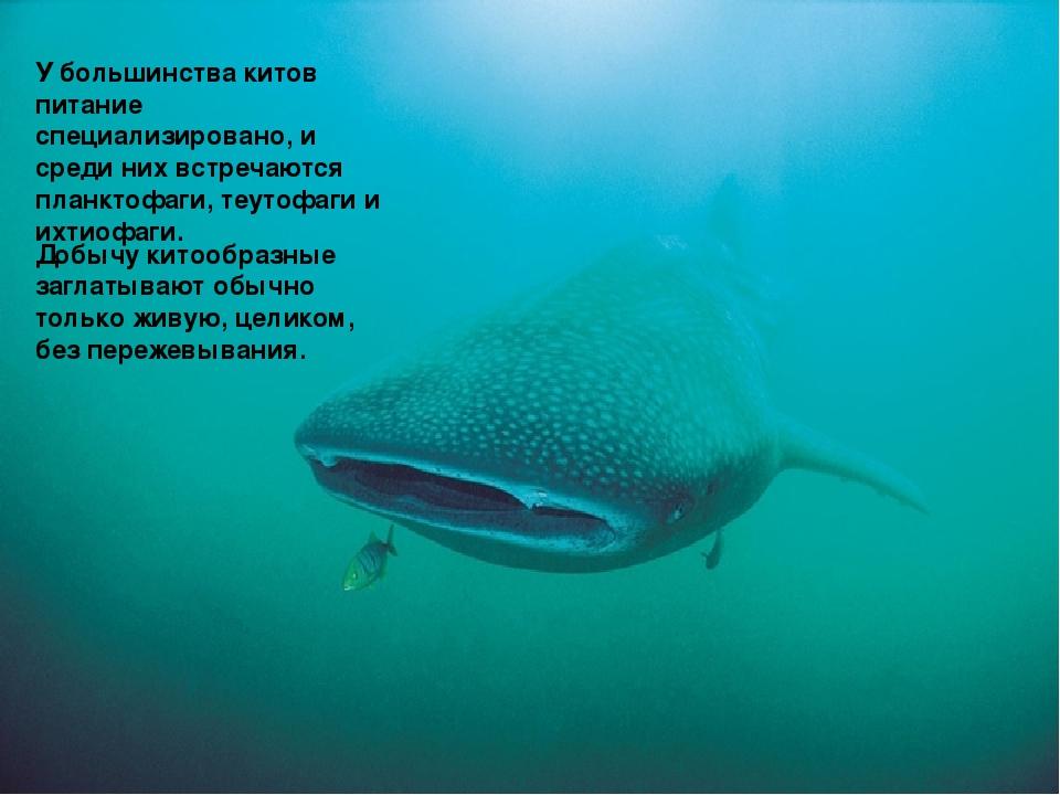 У большинства китов питание специализировано, и среди них встречаются планкто...