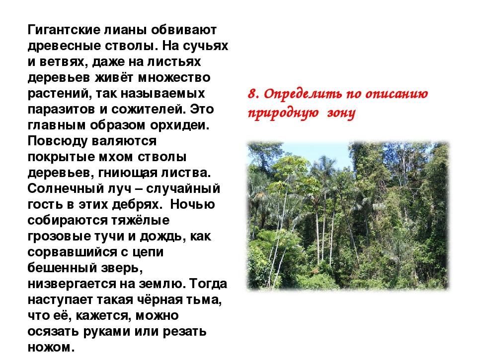 Гигантские лианы обвивают древесные стволы. На сучьях и ветвях, даже на листь...