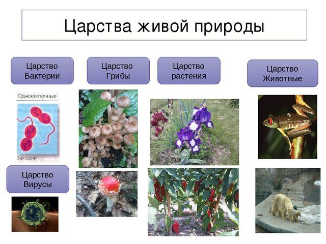 тема общее знакомство с цветковыми растениями