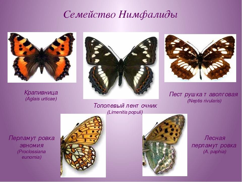 Семейство Нимфалиды Тополевый ленточник (Limenitis populi) Крапивница (Aglais...