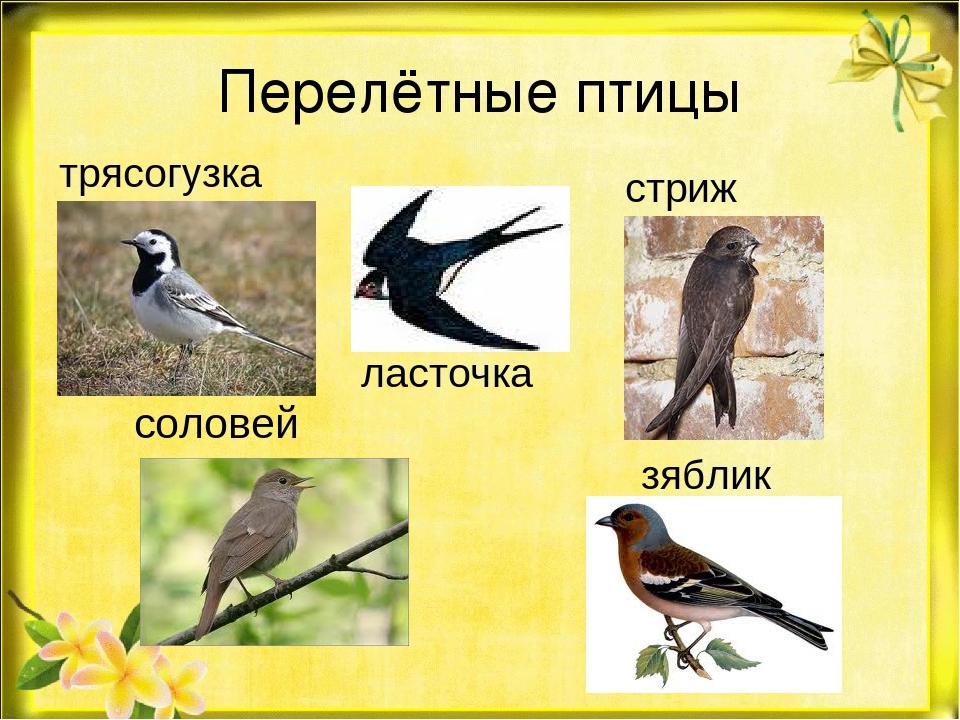 Смотреть картинки перелетных птиц