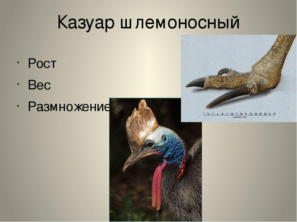 Казуар шлемоносный Рост Вес Размножение.