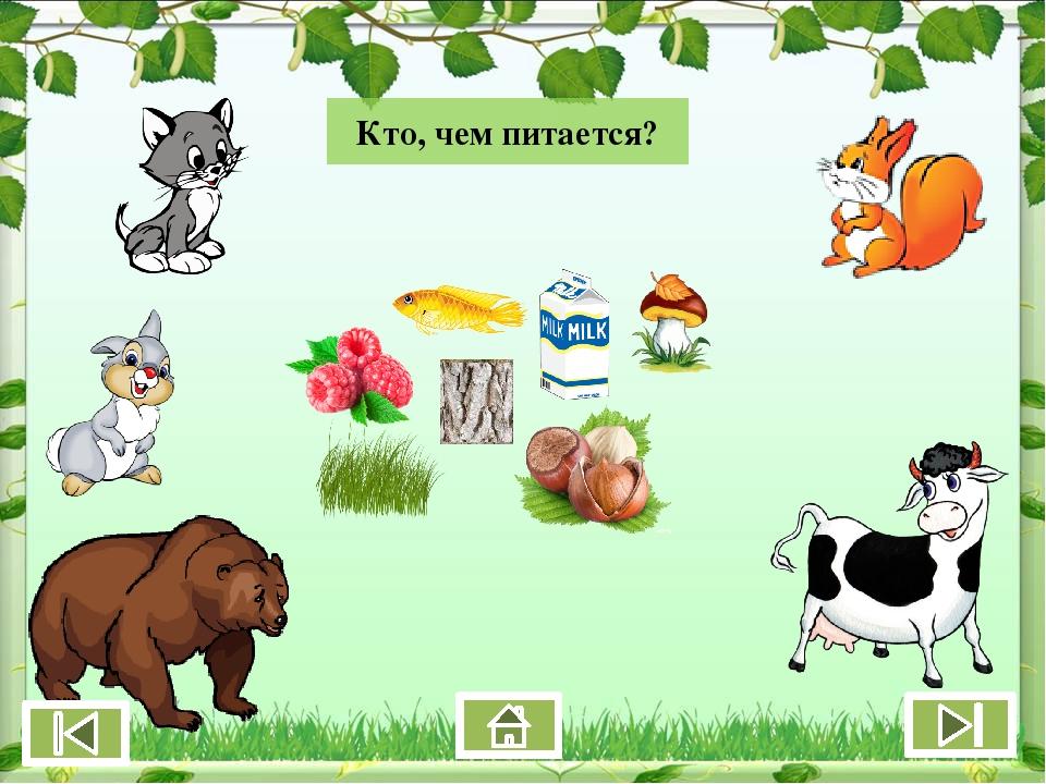 животные кто чем питается в картинках модульные автоматы авв