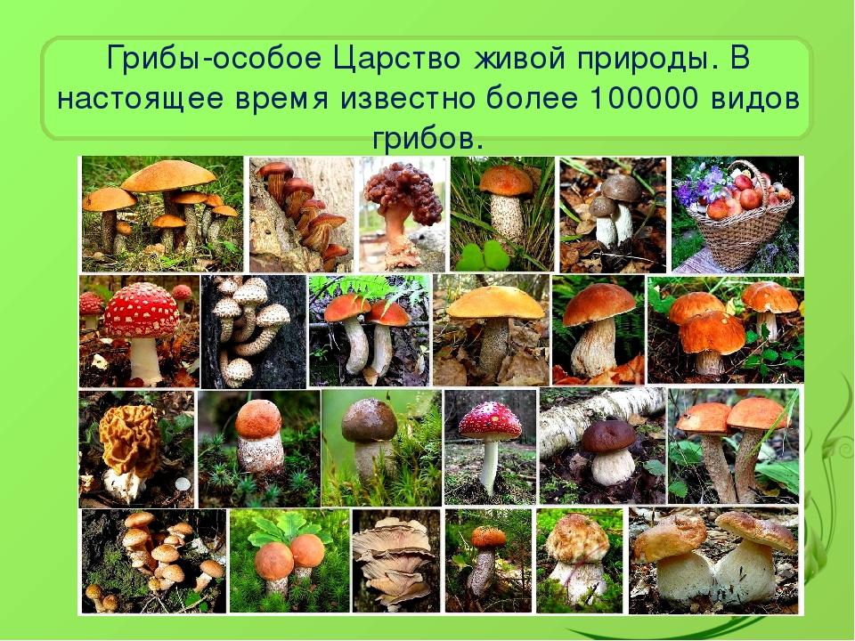 самая известная царство грибов картинки если