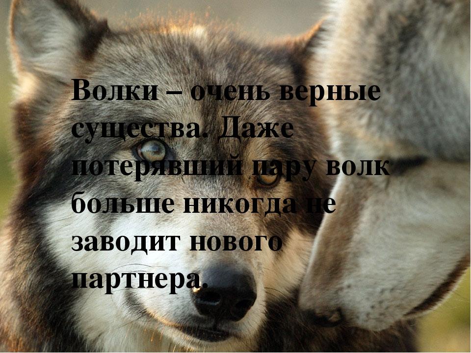Красивые открытки с волками с цитатами, дюрасел картинки открытки