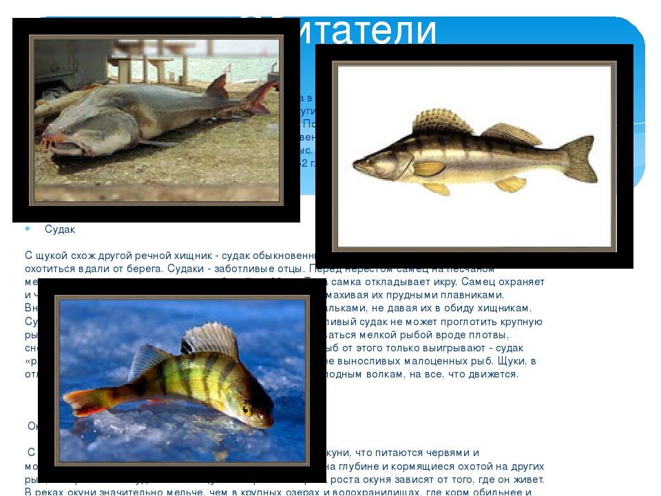 Белуга Белуга — долгоживущая рыба, достигающая возраста в 100 лет. В отличие...