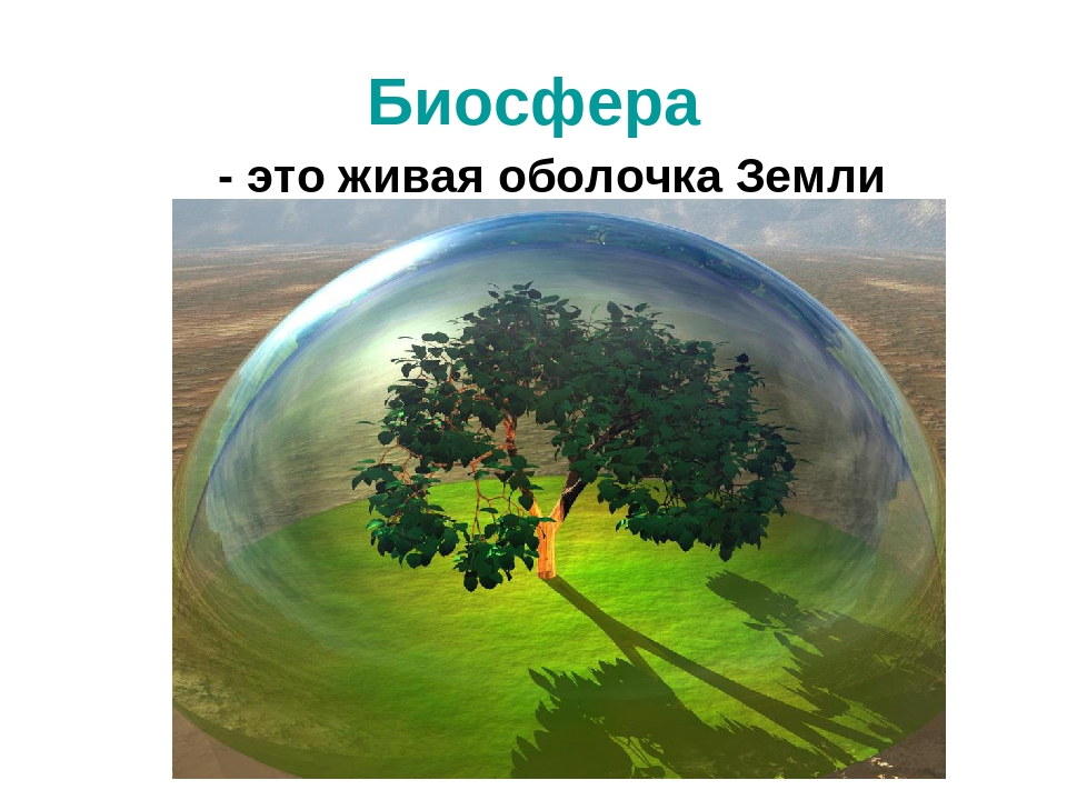 Картинки биосфера и человек