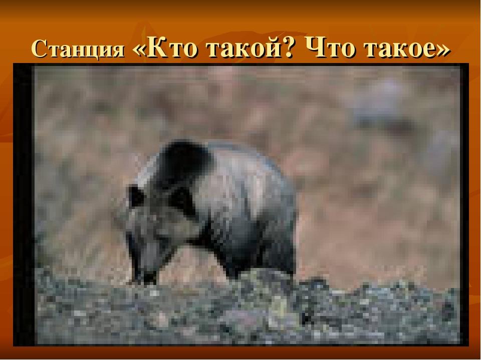 Станция «Кто такой? Что такое» Медведь гризли
