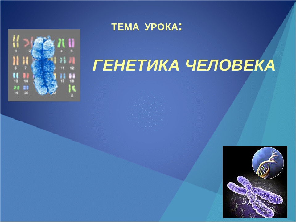 контрольная работа по теме Генетика класс Открытый класс Контрольная работа по генетике человека 10 класс