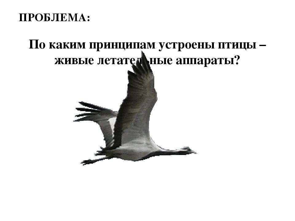 По каким принципам устроены птицы – живые летательные аппараты? ПРОБЛЕМА:
