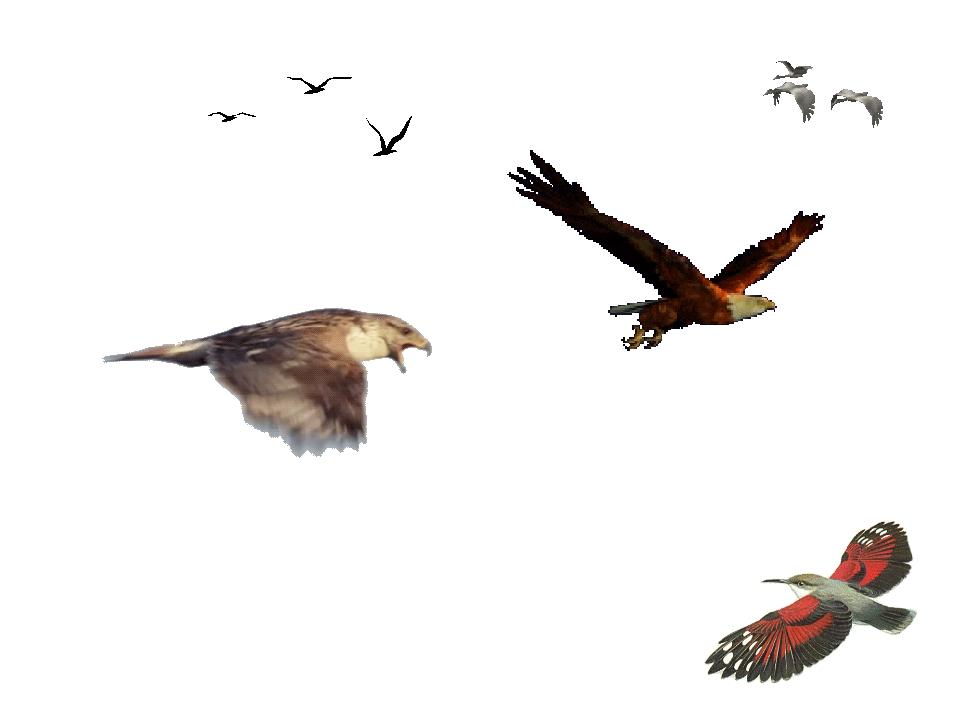1. Превращение передних конечностей в крылья; 2. Перьевой покров, обеспечива...