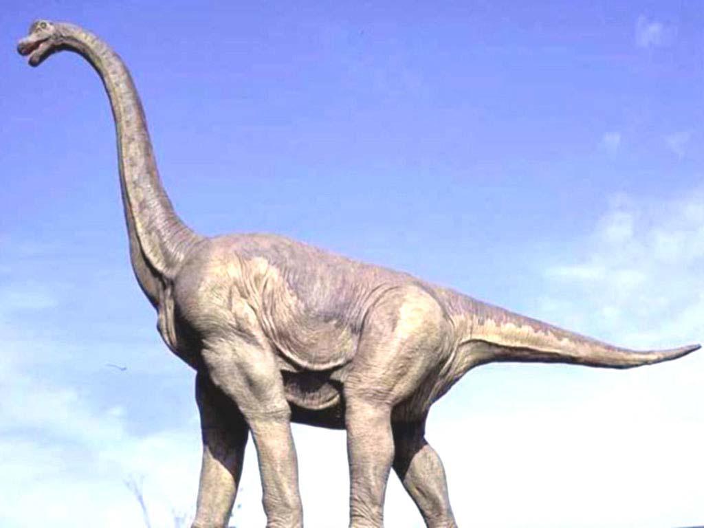 дотронуться брахиозавр фото и описание цитата пока