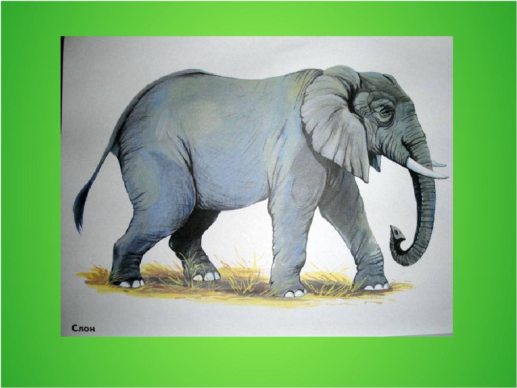 Картинки животных жарких странах тильды