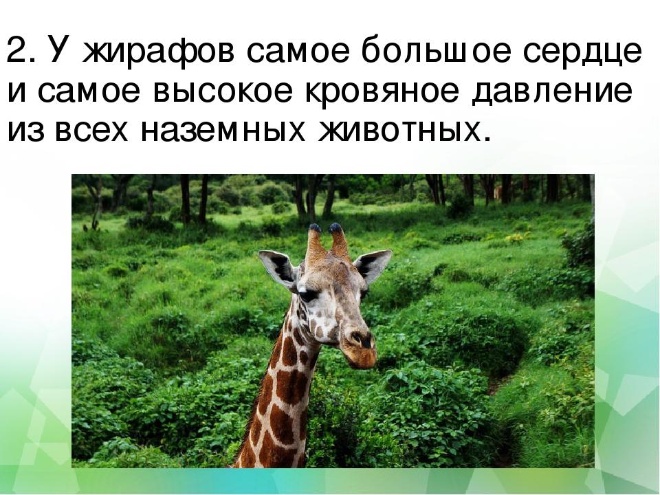 2. У жирафов самое большое сердце и самое высокое кровяное давление из всех н...