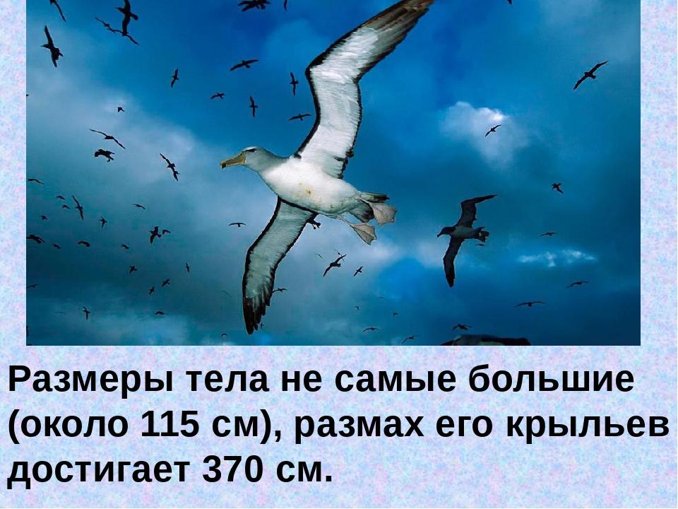 Размеры телане самые большие (около 115 см), размах его крыльев достигает 3...