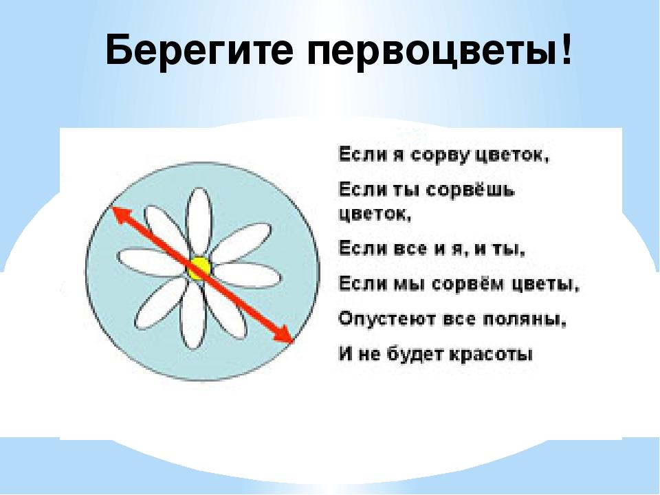 Берегите первоцветы картинки