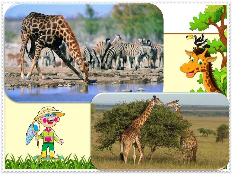 Картинки для презентации животные жарких стран