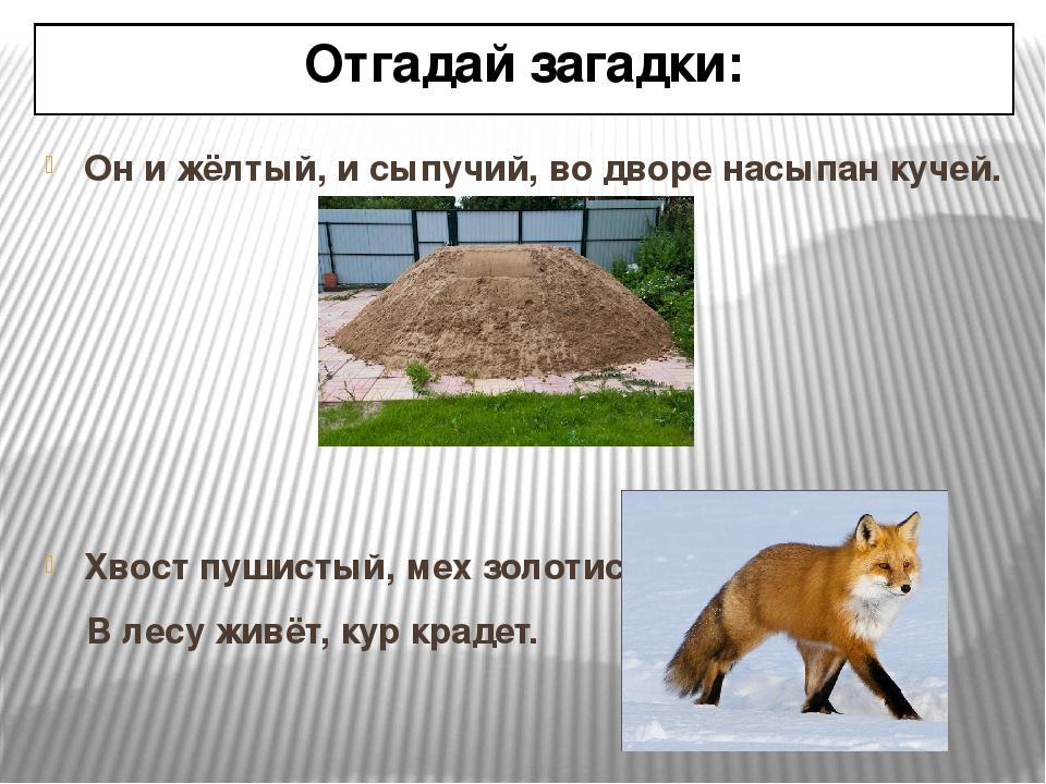 Отгадай загадки: Он и жёлтый, и сыпучий, во дворе насыпан кучей. Хвост пушист...