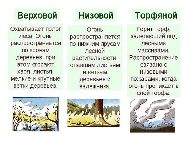того, законодательство лесные пожары и их разговидности вариантом можно пользоваться