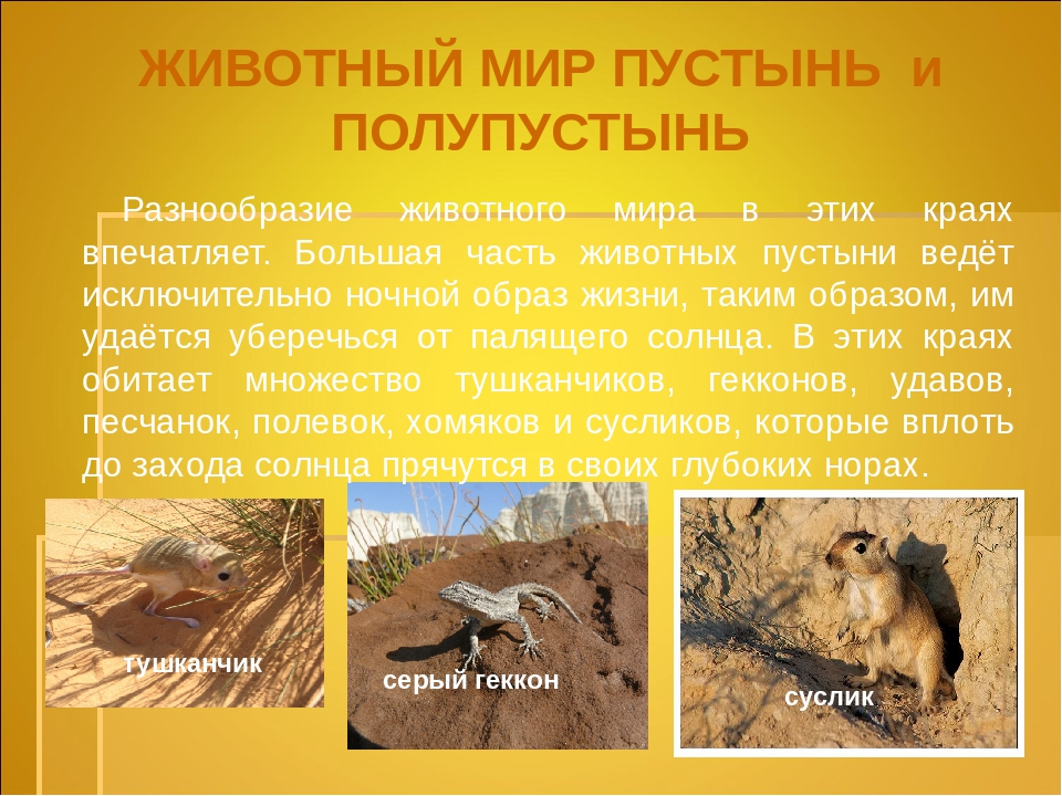 френч, фото животные пустыни описание с картинками отличаются богатством сюжетов