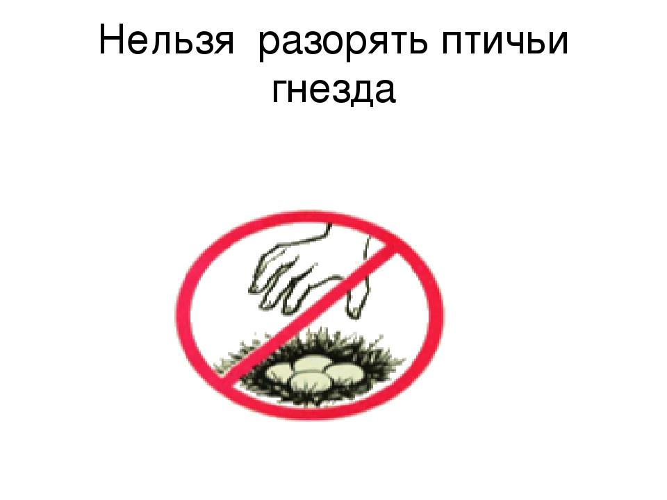 Картинка нельзя трогать насекомых
