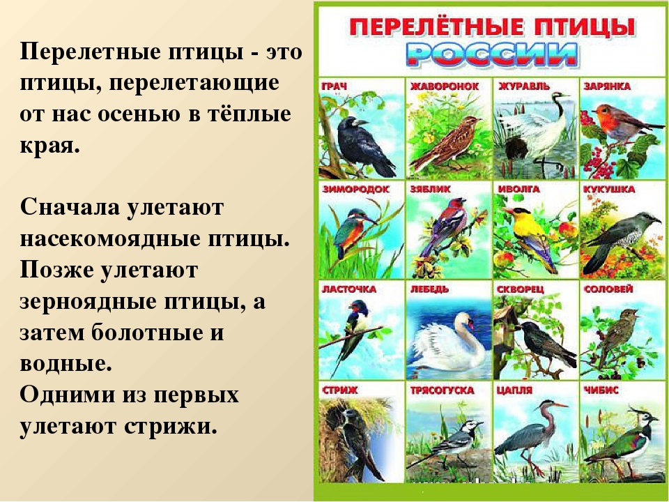 Музыкальные, перелетные птицы картинки с надписью