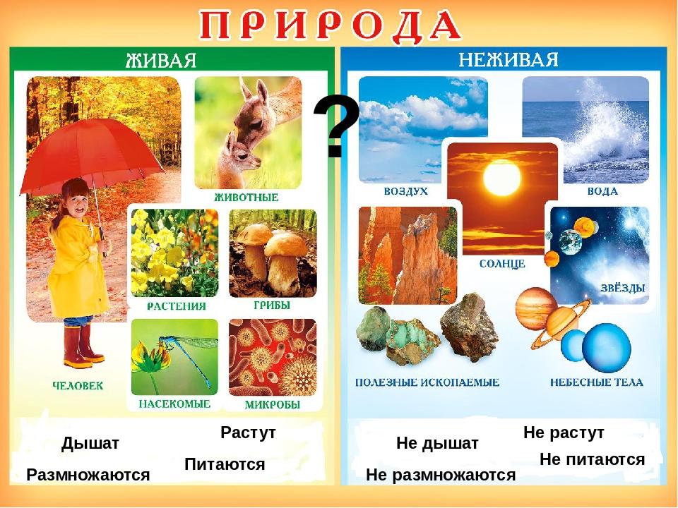 Живая и неживая природа поделки 20