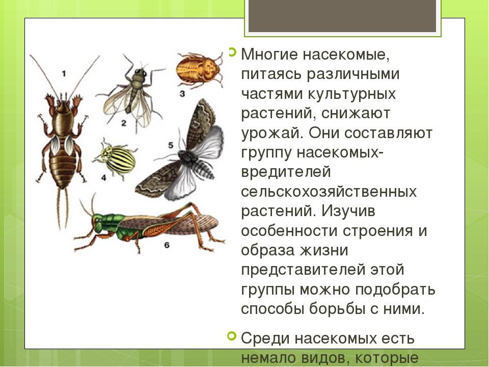 Многие насекомые, питаясь различными частями культурных растений, снижают уро...