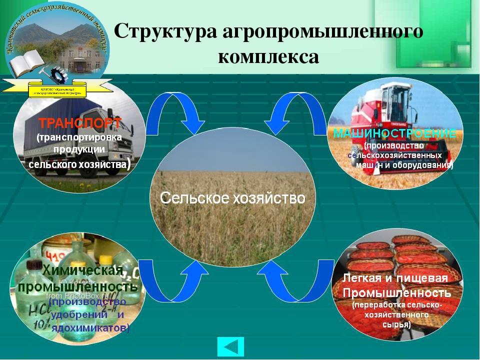 Структура агропромышленного комплекса