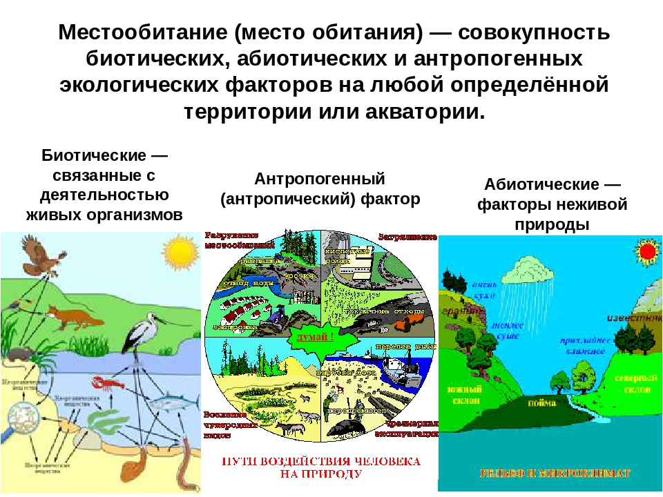 Местообитание (место обитания) — совокупность биотических, абиотических и ант...