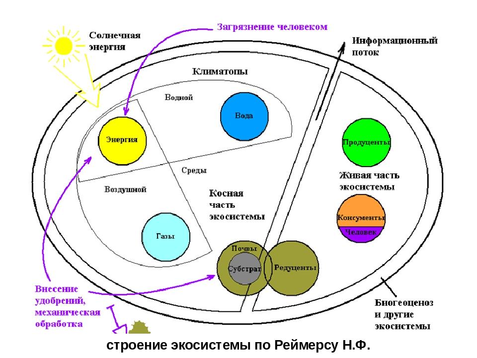 строение экосистемы по Реймерсу Н.Ф.