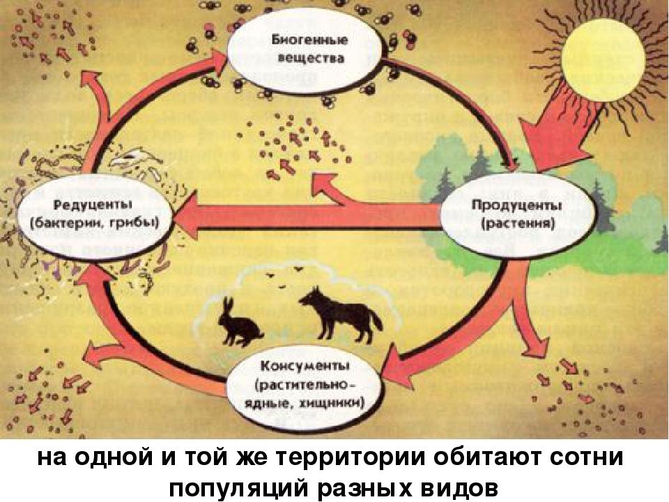 на одной и той же территории обитают сотни популяций разных видов