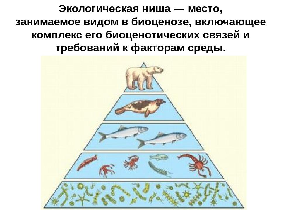 Экологическая ниша— место, занимаемоевидомвбиоценозе, включающее комплекс...