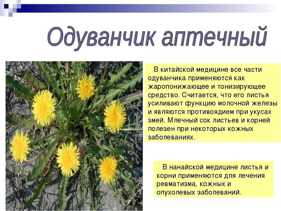 Лекарственные травы алтайского края доклад 6686