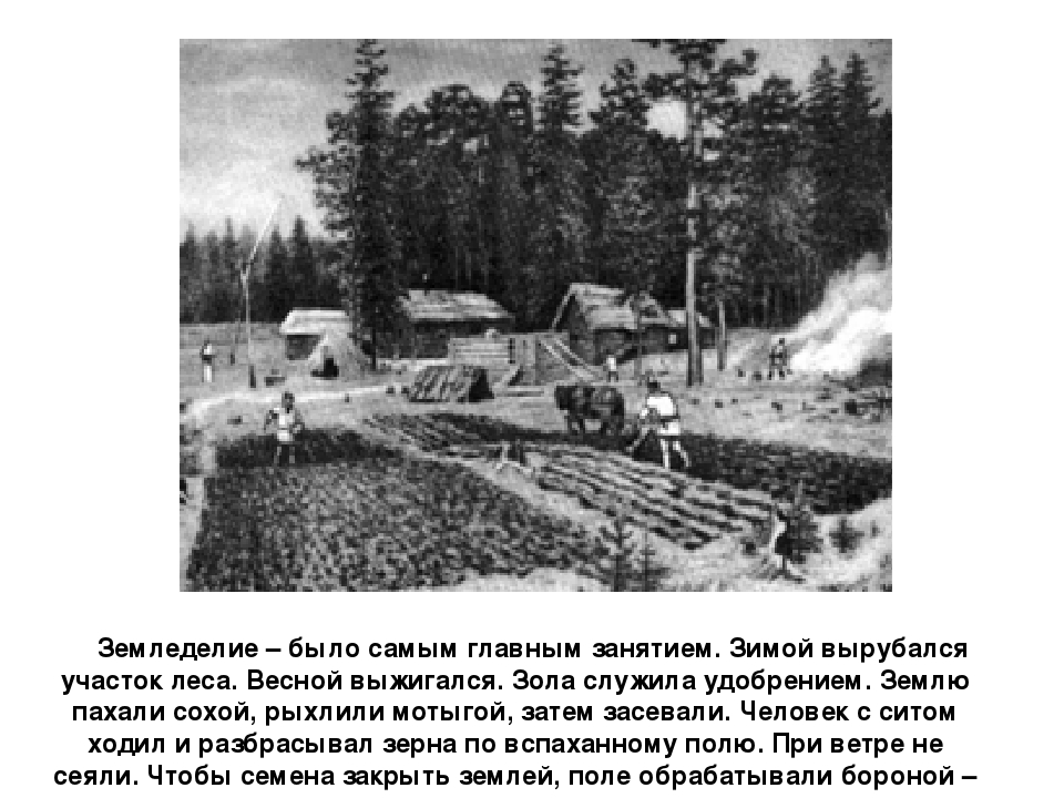 Земледелие – было самым главным занятием. Зимой вырубался участок леса. Весн...