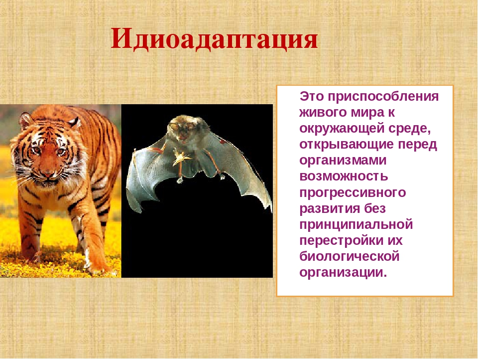 идиоадаптация у животных картинки