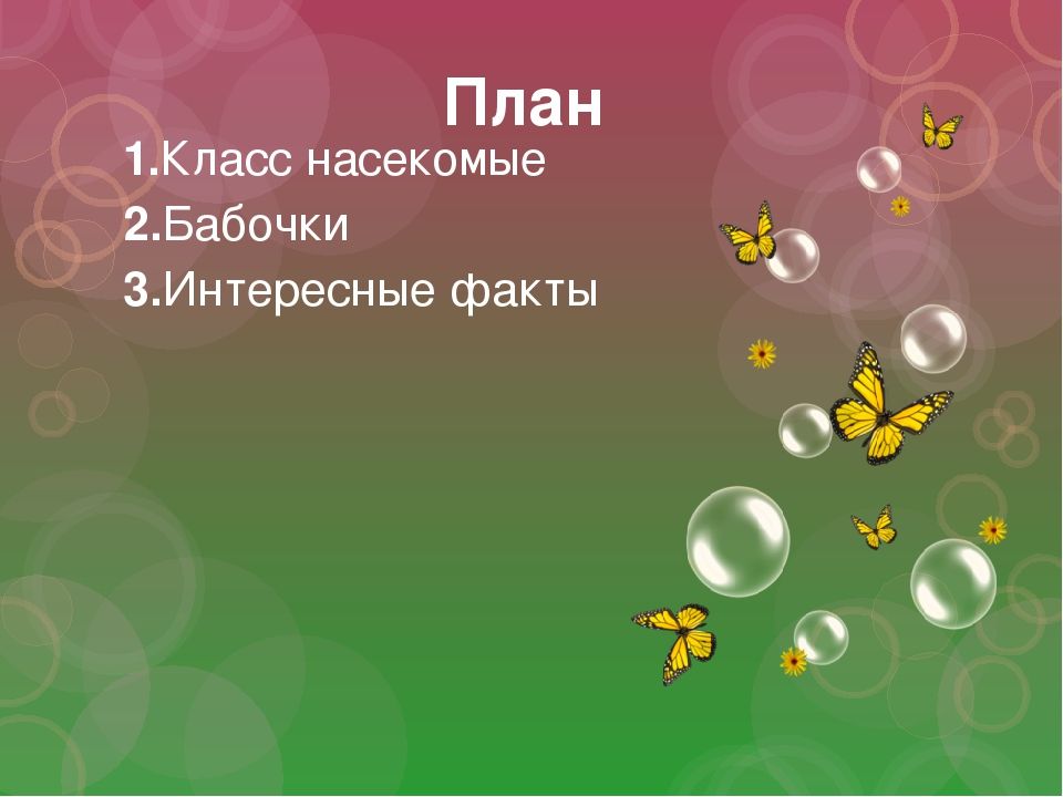 План 1.Класс насекомые 2.Бабочки 3.Интересные факты