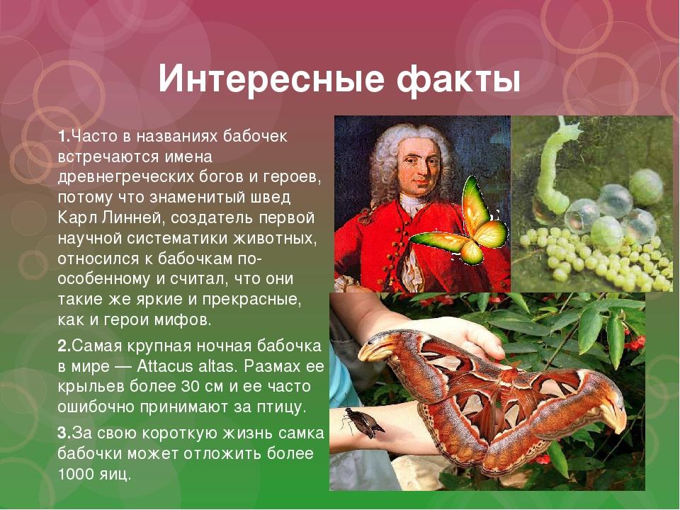 Интересные факты 1.Часто в названиях бабочек встречаются имена древнегречески...