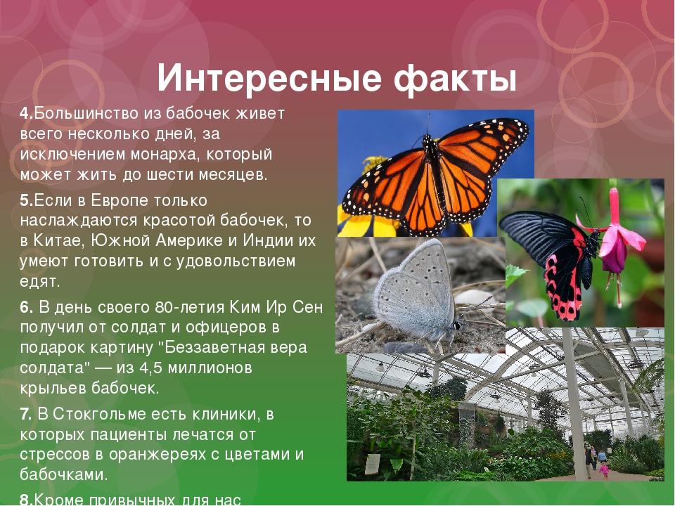 Интересные факты 4.Большинство из бабочек живет всего несколько дней, за искл...