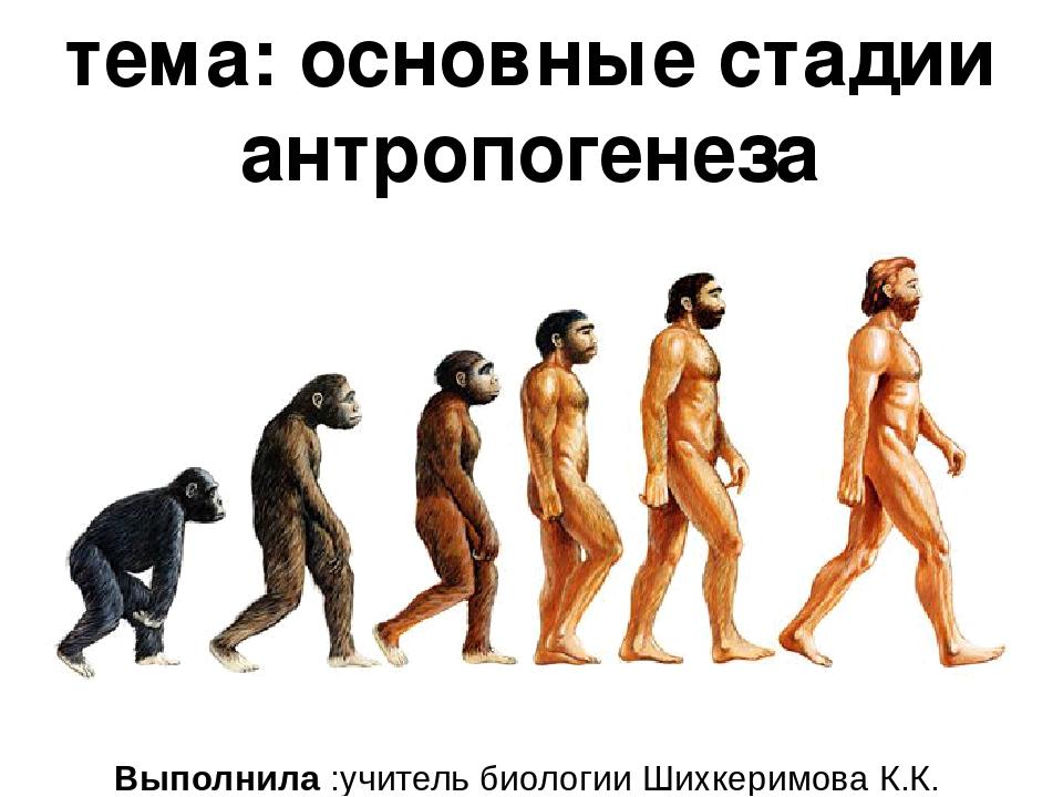 тема: основные стадии антропогенеза Выполнила :учитель биологии Шихкеримова К...