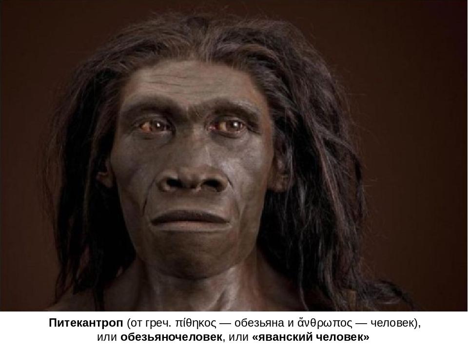 Питекантроп(отгреч.πίθηκος— обезьяна иἄνθρωπος—человек), илиобезьяноч...