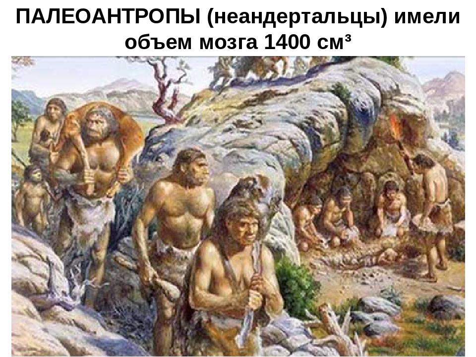ПАЛЕОАНТРОПЫ (неандертальцы) имели объем мозга 1400 см³