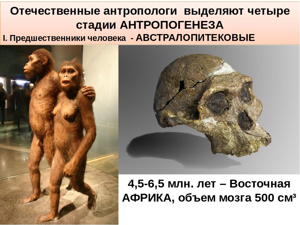 Отечественные антропологи выделяют четыре стадии АНТРОПОГЕНЕЗА I. Предшествен...