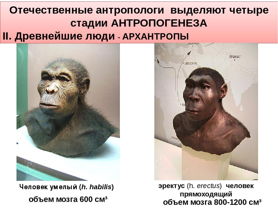 Отечественные антропологи выделяют четыре стадии АНТРОПОГЕНЕЗА II. Древнейшие...