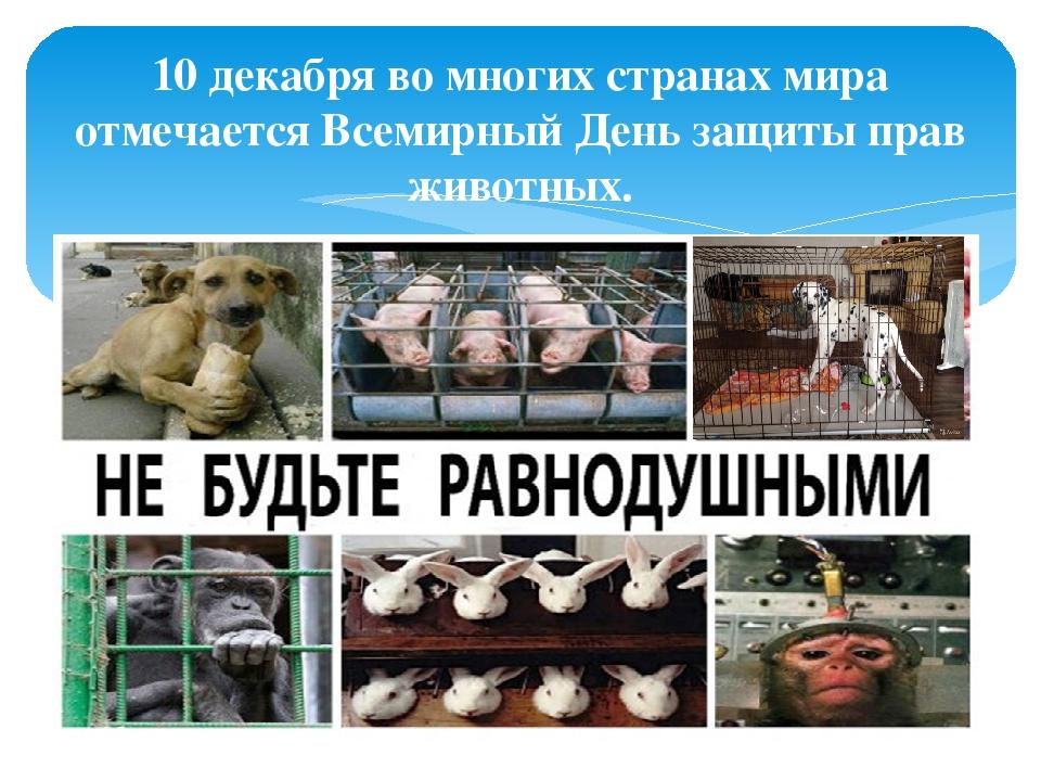 10 декабря во многих странах мира отмечается Всемирный День защиты прав живот...