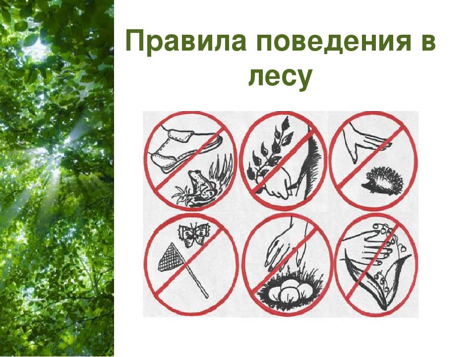 правила поведения в лесу фото кормят