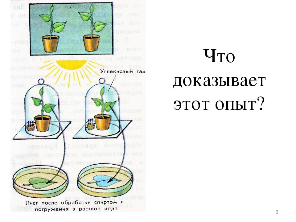 фоторепортажи растения опыты картинки отметить