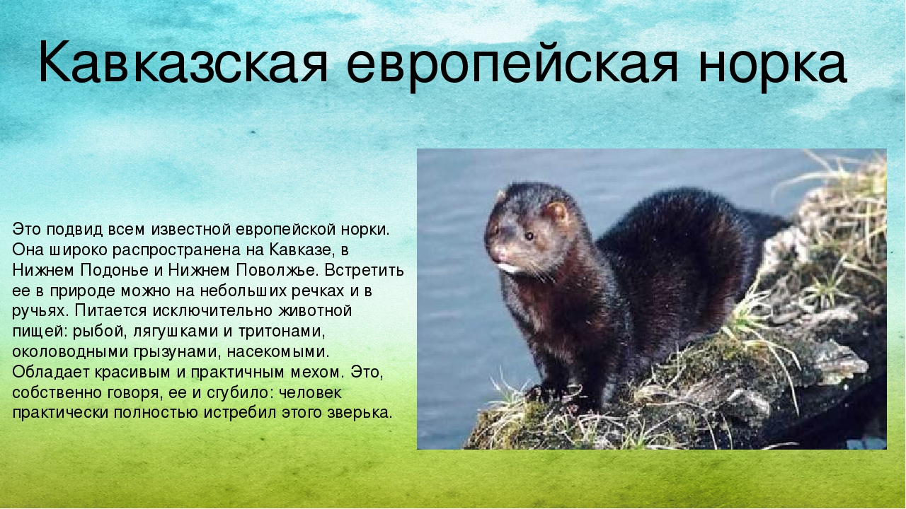 Картинки редких животных из красной книги ставропольского края