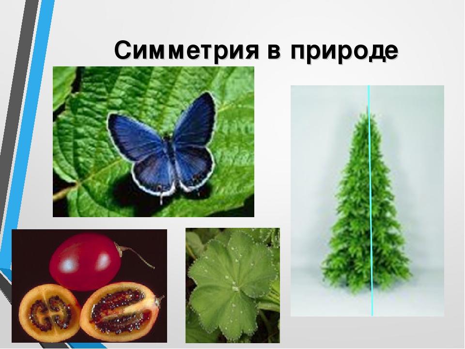 переносная симметрия картинки в природе